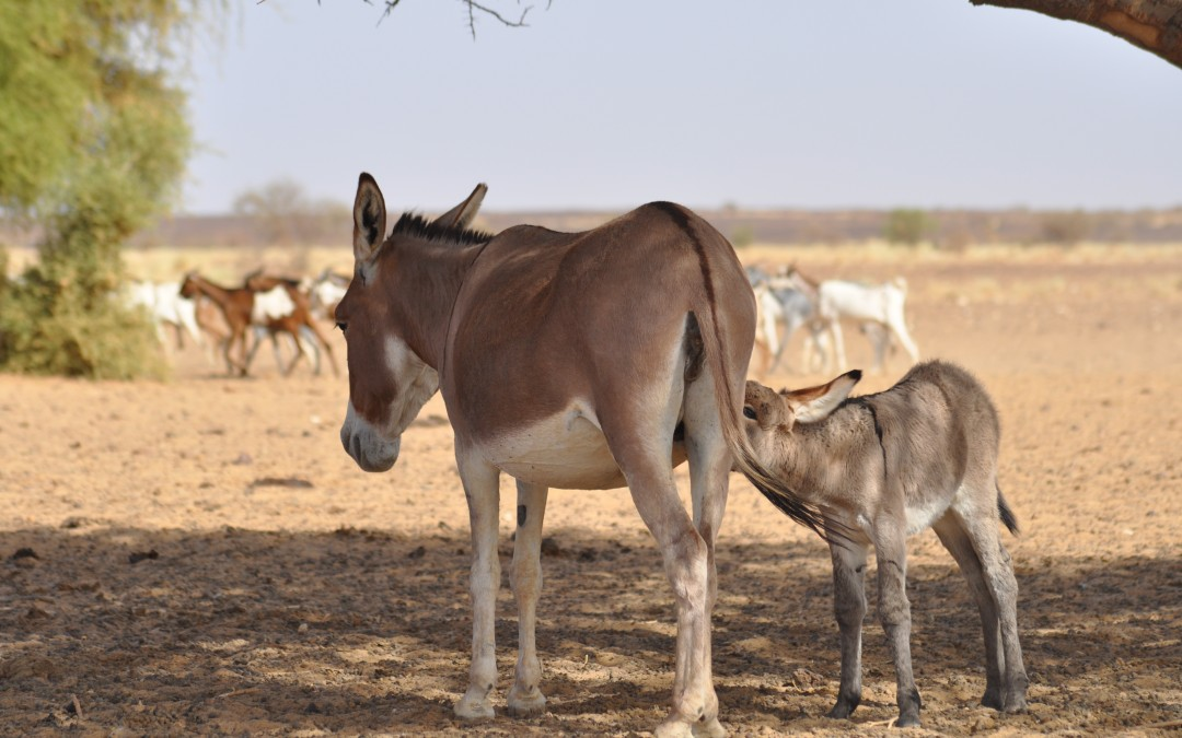 Building HEA Capacity Throughout the Sahel